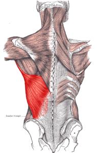 Explaining shoulder pain