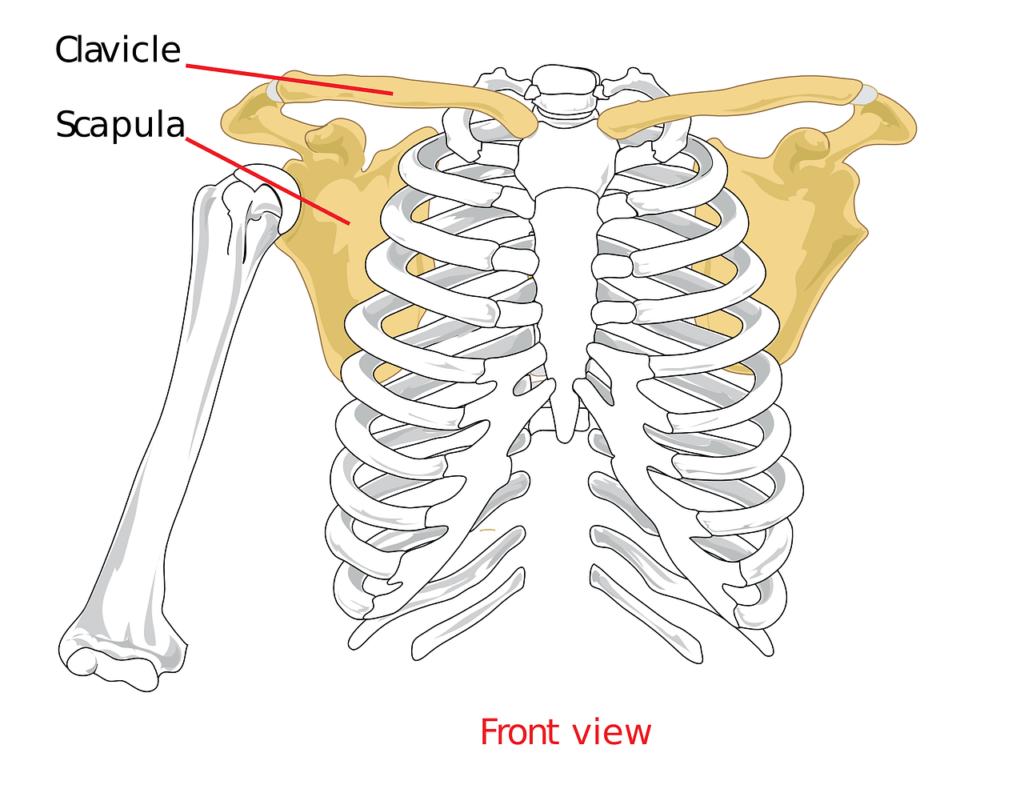 Frozen Shoulder and Shoulder Pain